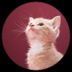 kitten video